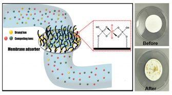 Schematic of a U(VI) selective membrane adsorber